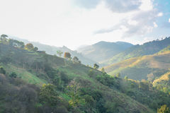 Doi Mae Salong Mountain, Chiang Rai, Thailand 3 Lizenzfreies Stockfoto