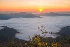 Doi Pha Tang Chiang Rai Thailand Fotos de Stock Royalty Free