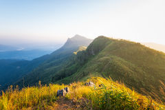Doi Pha Tang. Mountains  with golden  sunshine  to Doi Pha Tang, Chiang Rai, Thailand during sunset Royalty Free Stock Image