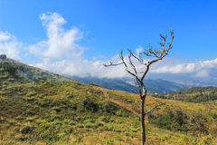 Doi Pha Tang in Wiang Kaen district,Chiang Rai,Thailand. Doi Pha Tang is a viewpoint on top of a high cliff over the Thai-Laotian border affording a delightful royalty free stock images