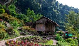 Doi Pui, Chiang Mai Thailand Nov 2015 Royaltyfria Foton