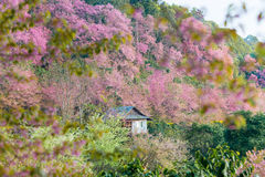 Doi pui Chiangmai stock photos