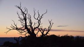 Doigts de désert Images libres de droits