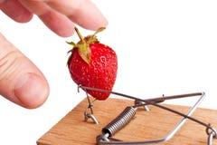 Doigts sélectionnant la fraise de la souricière Image stock