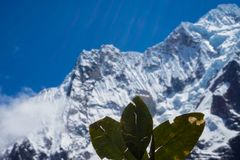Salkantay Mountain Hike, Peru. Doing a ceremony with coca leaves at Salkantay Mountain Summit Royalty Free Stock Image