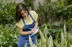 Doing inventory in a nursery garden. Cute female gardener working on inventory Royalty Free Stock Photography