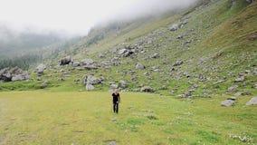 Doing nordic walking Stock Photo