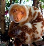 Doini ö, Papua Nya Guinea Royaltyfri Fotografi