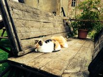 dois abandonaram os gatos que dormem em um vagão de madeira velho fora Foto de Stock Royalty Free