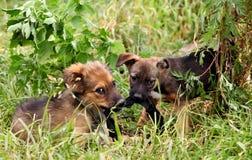 Dois alegres e cachorrinho doce que joga no campo imagem de stock royalty free
