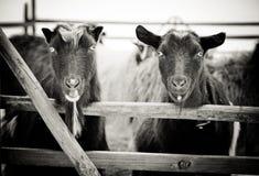 Dois amigos Foto de Stock Royalty Free