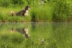 Dois amigos do cão que sentam-se pela água fotos de stock royalty free