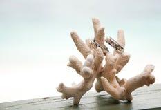 Dois anéis de casamento no coral na frente do beira-mar Fotografia de Stock