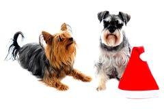 Dois animais de estimação adoráveis bonitos imagens de stock royalty free