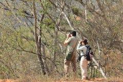 Dois birders que olham estudando o comportamento do pássaro em uma floresta tropical imagens de stock royalty free
