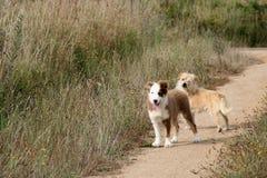 Dois bonitos, cães felizes que esperam em um trajeto Imagem de Stock