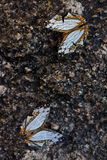 Dois brancos e erro amarelo da borboleta na cachoeira Imagem de Stock Royalty Free
