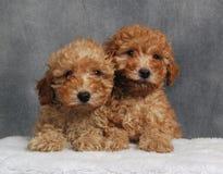 Dois brinquedos Fotografia de Stock Royalty Free