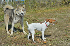 Dois cães 3 Fotografia de Stock Royalty Free