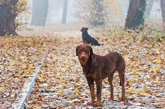 Dois cães abandonados Imagens de Stock