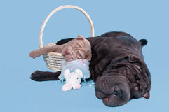 Dois cães adormecidos imagens de stock