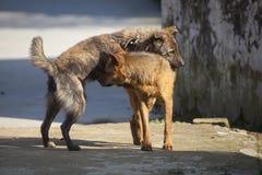 Dois cães amigáveis Imagens de Stock