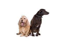 Dois cães amigáveis Fotografia de Stock