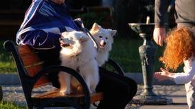 Dois cães brancos sentam-se com um proprietário idoso em um banco no parque Brincadeiras com cães vídeos de arquivo