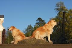 Dois cães de assento protegem a casa Fotos de Stock Royalty Free