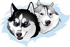 Dois cães de puxar trenós maliciosos Fotos de Stock Royalty Free