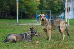 Dois cães desabrigados imagem de stock royalty free