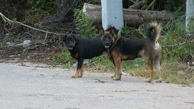 Dois cães dispersos em uma rua suja Um cão desabrigado na parte abandonada da cidade vídeos de arquivo