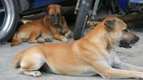 Dois cães dispersos encontram-se na rua sob o carro azul Cães desabrigados video estoque