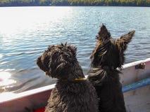 Dois cães em um barco a remos fotos de stock