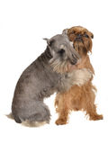 Dois cães engraçados que jogam abraçando-se Imagem de Stock