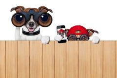 Dois cães intrometido imagens de stock