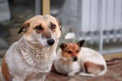 Dois cães na rua imagem de stock royalty free