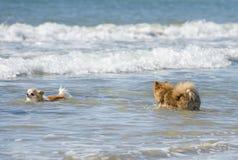 Dois cães no mar Fotografia de Stock Royalty Free