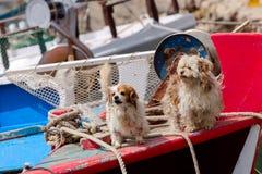 Dois cães no navio fotografia de stock royalty free