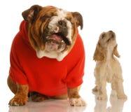 Dois cães que cantam ou que urram Imagens de Stock Royalty Free