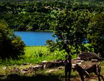 Dois cães que jogam no lago em montanhas guatemaltecas fotos de stock