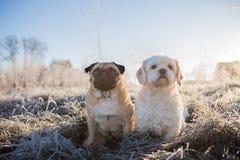 Dois cães que sentam-se de lado a lado fotografia de stock royalty free