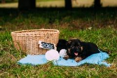 Dois cachorrinhos brincalhão Foto de Stock Royalty Free