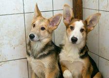 Dois cachorrinhos em um abrigo sujo fotografia de stock royalty free