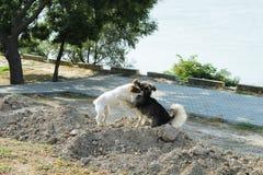 Dois cachorrinhos que jogam na areia ao lado do rio foto de stock