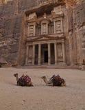 Dois camelos na frente do Tesouraria Fotografia de Stock