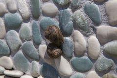 Dois caracóis de terra na parede do mosaico Imagens de Stock