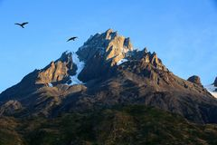 Dois Caracaras mostrados em silhueta contra o céu azul sobre uma montanha rochosa do granito, parque nacional de Torres del Paine Fotos de Stock Royalty Free