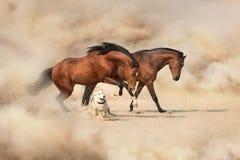 Dois cavalo e cão fotos de stock
