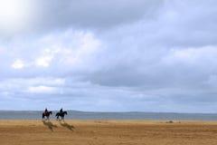 Dois cavalos Foto de Stock Royalty Free